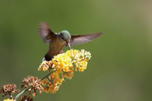 hummingbird hovering over a flower